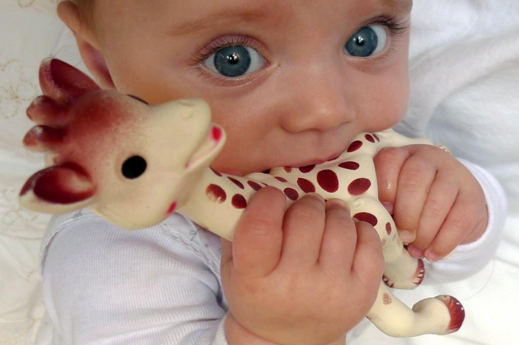 7786788782_un-bebe-en-train-de-jouer-avec-sophie-la-girafe-image-d-illustration